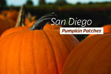 Price varies depends on size and variety of pumpkin
